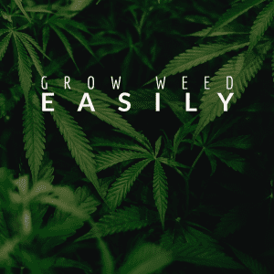Grow Weed Easily