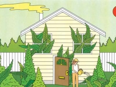 How To Grow Marijuana Indoors Grow Your Own Weed
