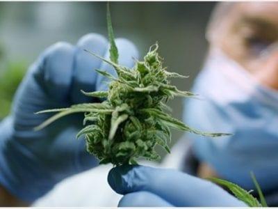 How cannabis Treats COVID-19? Truth Has Been Revealed!