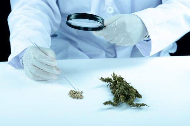 Health Benefits Cannabis Vs Cbd