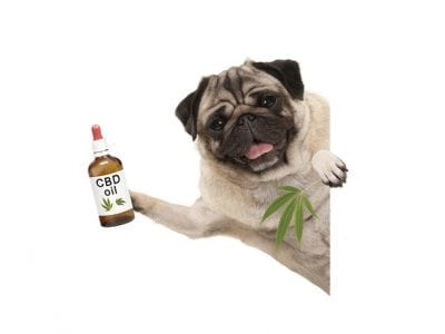 Pet And Cbd Oil