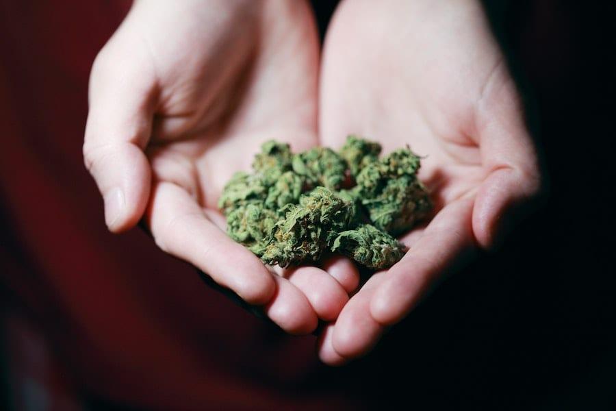 cannabis cbd strain